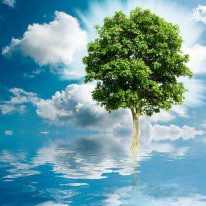 Nuevas frases sobre cuidar el medio ambiente, pensamientos sobre cuidar el medio ambiente, dedicatorias sobre cuidar el medio ambiente, sms sobre cuidar el medio ambiente, mensajes sobre cuidar el medio ambiente, ejemplos de palabras sobre cuidar el medio ambiente