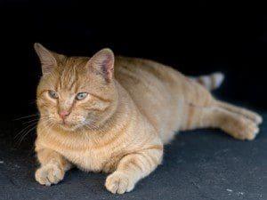 curiosidades gatos, misterios gatos, tips gatos