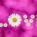 bellas frases de amor para compartir en facebook,lindas frases de amor para compartir en facebook