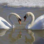 descargar mensajes para mi pareja por el día de San Valentín,frases bonitas para mi pareja por el día de San Valentín,descargar frases bonitas para tu pareja por el día de San Valentín,descargar mensajes para tu pareja por el día de San Valentín
