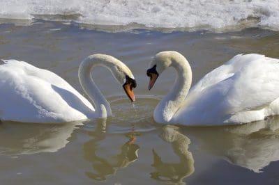 Bonitos mensajes para dedicar en San Valentín | Frases de amor