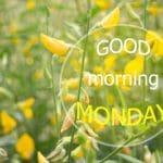 buscar bonitas palabras de buenos días para celulares, ejemplos de mensajes de buenos días para whatsapp
