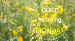 Bellos Mensajes De Buenos Días Para Celulares | Frases De Buenos Días