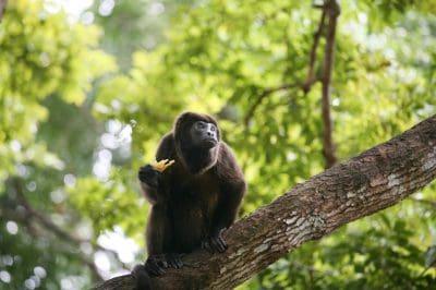 datos sobre los animales más exóticos del planeta, consejos sobre los animales más exóticos del planeta, información sobre los animales más exóticos del planeta, recomendaciones sobre los animales más exóticos del planeta, tips sobre los animales más exóticos del planeta, sugerencias sobre los animales más exóticos del planeta