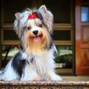Buenas recomendaciones de cómo viajar con mi mascota, los mejores tips para viajar con mi mascota
