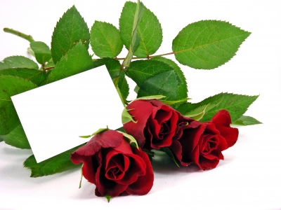 descargar frases de amor para tu novia, nuevas frases de amor para tu novia