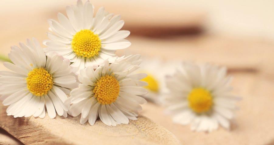 descargar mensajes de agradecimiento por condolencias, nuevas palabras de agradecimiento por condolencias